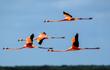 Những bức ảnh tuyệt đẹp về động vật hoang dã khắp thế giới