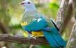 Cận cảnh các loài chim bồ câu hoang dã đẹp nhất quả đất