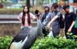 Sung sướng trong khu vườn chim giữa trung tâm Sài Gòn