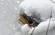 Tuyệt kỹ bí mật giúp cá sấu sống sót được trong nước đã đóng băng