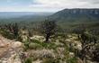 Kỳ lạ loài hoa tuyệt đẹp nở rộ sau những trận cháy rừng ở Australia