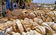 Vỏ sò tai tượng Philippines đặc biệt sao giá triệu USD?