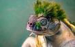 """Loài rùa có bộ """"tóc xanh"""" chất chơi nhất thế giới động vật"""