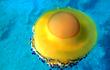 """Cận cảnh loài sứa trứng rán """"ngon lành"""" nhất đại dương"""