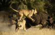 Đôi vợ chồng dùng ảnh đẹp để cứu động vật hoang dã