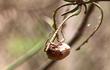 Cảnh báo loài bọ cánh cứng phá hoại mùa màng tấn công nông dân Bình Phước