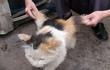 Mèo mọc cánh, rắn có chân và top động vật có thật quái dị nhất