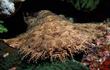 Ngoại hình kinh dị khó tin của cá mập đã tiến hóa dưới đáy biển