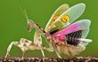 Những sinh vật kỳ lạ tại Việt Nam khiến thế giới kinh ngạc