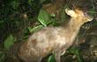 """Bẫy ảnh """"tóm"""" nhiều động vật hiếm thấy ở Thừa Thiên - Huế"""