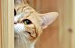 Kiêng nói bí mật cho mèo và điều mê tín phổ biến trên thế giới
