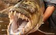 Top thủy quái nước ngọt ghê gớm và nguy hiểm nhất trên thế giới