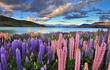Ngỡ ngàng những cánh đồng hoa được mệnh danh đẹp nhất thế giới