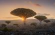 """Giải mã loài cây huyền bí nhất hành tinh cả thế giới """"phát cuồng"""""""