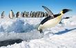 """Tiết lộ sốc """"sinh vật ngoài hành tinh"""": Xuất hiện đầy ở Nam Cực!"""