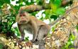 Hai cá thể khỉ Bắc Giang quý hiếm sao lập tức được thả về rừng?