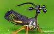 """""""Đứng hình vài giây"""" khi thấy loài côn trùng như đến từ vũ trụ"""