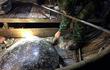 Rùa 120 kg sa lưới ở Quảng Bình: Hiếm sao thả ngay về biển Đông?
