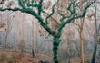 Khung cảnh sau những vụ cháy rừng kéo dài ở Australia