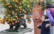 Chiêm ngưỡng sản phẩm trâu cõng quất bonsai hút khách
