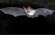 Cảnh dơi bay thắng giải ảnh động vật có vú đẹp nhất 2021