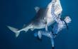 Rùng mình cảnh thợ lặn chơi đùa, âu yếm cá mập hổ khổng lồ