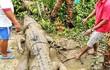 Thót tim vụ cá sấu khổng lồ tấn công người hãi nhất TG
