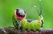 """Ngắm """"nhan sắc"""" lung linh của những loài côn trùng đẹp nhất thế gian"""