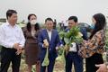 Hà Nội bàn cách tiêu thụ 600 tấn củ cải ở Mê Linh