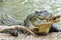Rùng rợn đàn cá sấu chuyên săn giết người, mỗi tháng 1 mạng