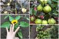 """Kỳ thú những loại cây mọc """"ngang trái"""" nhất Việt Nam"""