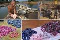 Ôm giấc mộng đổi đời, người dân đổ xô đào đá quý ở Campuchia