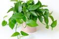 6 loại cây phong thuỷ nên trồng trong phòng ngủ giúp tăng tài vận