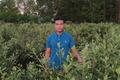 Đem cây dại về trồng bán, người đàn ông Lạng Sơn thu cả tỷ đồng/năm