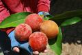 Dân mạng sửng sốt với loại quả lạ lẫm ở Việt Nam