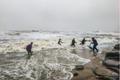 Hàng tấn sò mai theo sóng dạt vào bờ, người dân kéo nhau đi vợt