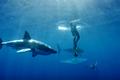 Video: Thót tim cảnh cá mập phá lồng kính để tấn công người bên trong
