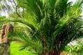 4 loại cây là mèo Thần Tài, đặt ở đâu là gọi lộc lá về ở đó