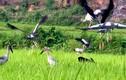 Lý giải chim lạ xuất hiện bất thường tại Việt Nam