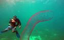 Tận mắt loài sâu biển khổng lồ nhất thế giới
