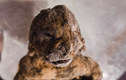 Kinh ngạc phát hiện xác sư tử nguyên vẹn sau 12000 năm