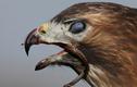 Khi rắn bị khuất phục bởi mỏ chim