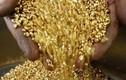 Mỏ vàng Phước Sơn: 22 tấn vàng nhưng hớ hênh... mất toi 15 tấn rồi!