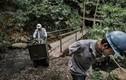 """Cuộc sống của những người """"săn"""" ngọc bích ở Colombia"""
