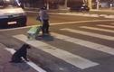 Video: Chú chó sang đường khiến nhiều người xem xấu hổ