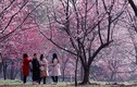 Ngây ngất cảnh sắc mùa xuân rực rỡ khắp thế giới