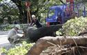 Bão Trà Mi tàn phá Nhật Bản, hơn 100 người thương vong