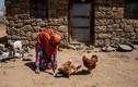 Khốn cùng cuộc sống người dân Châu Phi vì thiên tai hoành hành