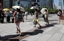 Nắng nóng kinh hoàng tại Nhật Bản, hàng chục người tử vong