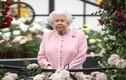 """Kinh ngạc những điều bình thường nhưng """"lạ hoắc"""" với Nữ hoàng Anh"""